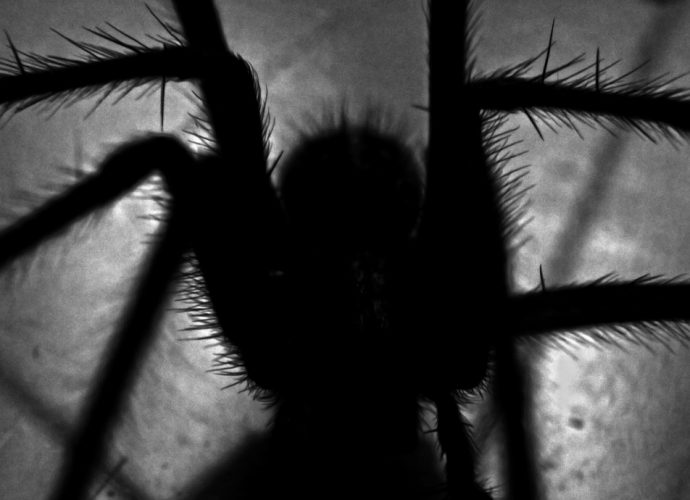 Feature photo for An Arachnophobia Nightmare. Silhouette of a large hairy spider.