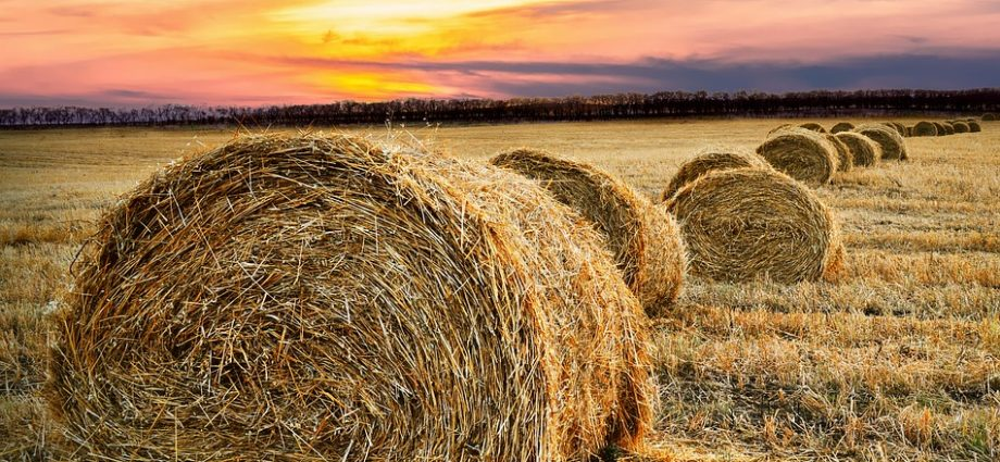 Wicked Wednesday - Neighbours in the Hay