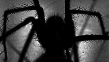 An Arachnophobia Nightmare